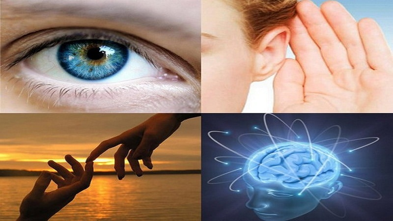 4 типа психологии людей